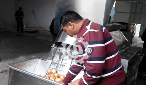 Onion Peeling and Top Tail Cutting Machine Running In India